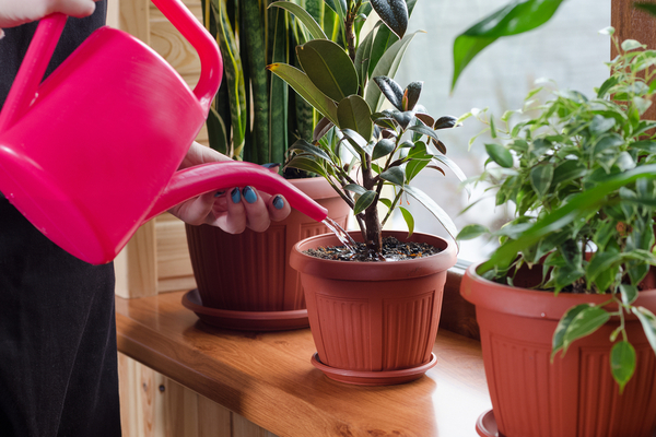Keep Cool This Summer Watering Plants