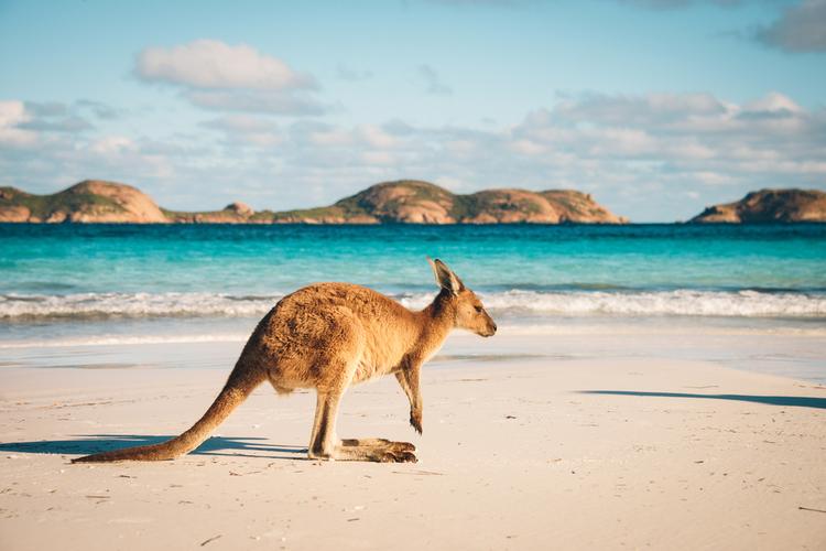 Australia's Best Beaches Kangaroo